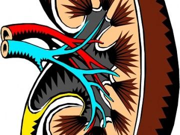 혈관 덩어리 콩팥, 콜레스테롤 관리로 만성콩팥병 예방