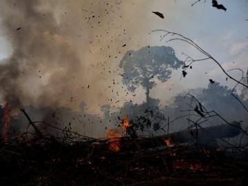 [오마이뉴스연속기고-이의철] 한국인이 먹은 소고기 한 점에 아마존 밀림이 사라진다